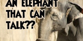 An elephant that can talk?? Meet Koshik!